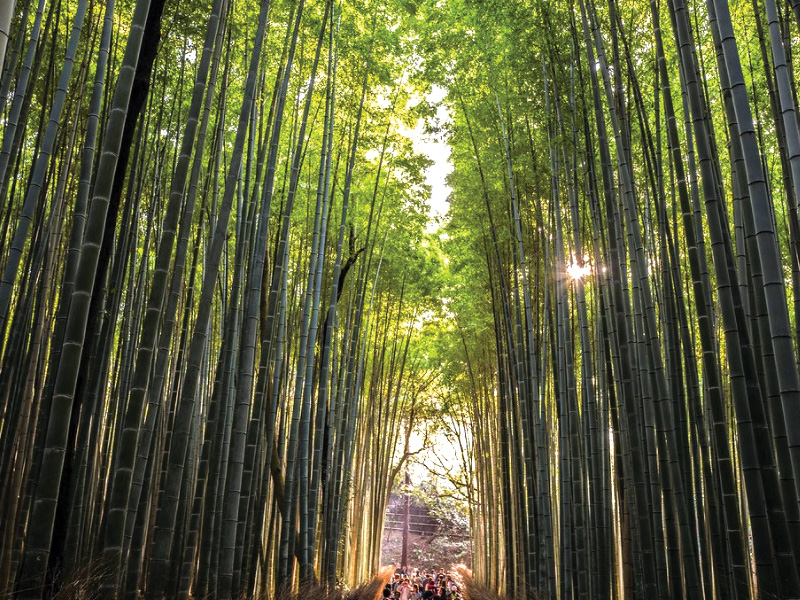 Bamboo-forest-in-Kyoto