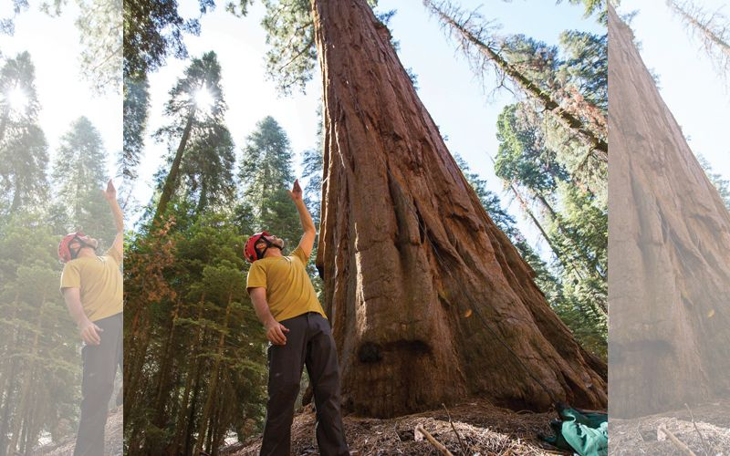 Fossil research  discovers growth mystery of world's earliest trees