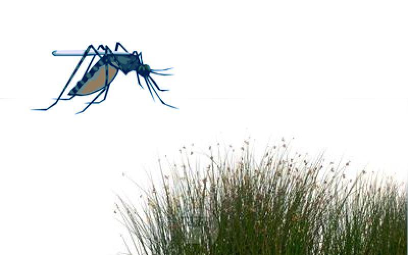 Secret of combating malaria lies in sperm