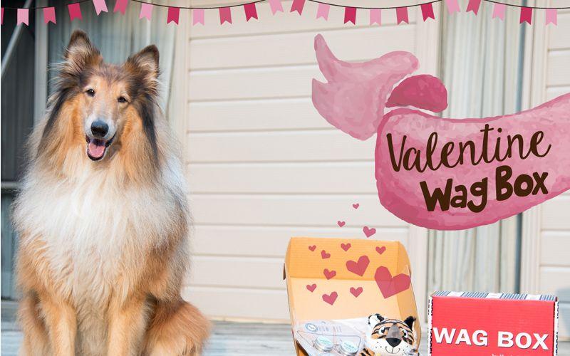 Valentine-wag-box