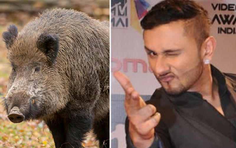 Yo Yo Honey Singh Scares Away Wild Boars