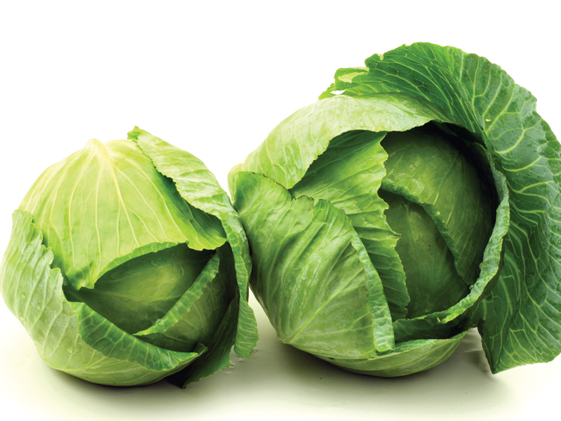 your-food-cabbage